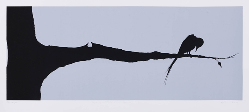 Skadet fugl bilde av Anja Cecilie Solvik