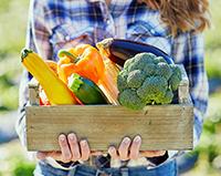 Trekasse med masse friske grønnsaker