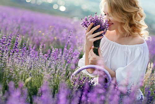 Dame med en bukett lavendelblomster ute i en lavendelåker