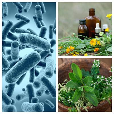 mikrober og urter
