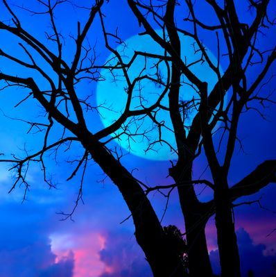 Fullmåne i blåtoner med mørkt tre i forgrunnen