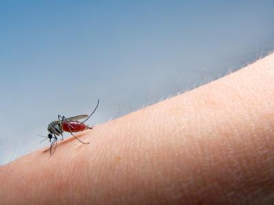 når kommer myggen